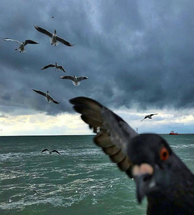 Даже голуби делают селфи. | Фото: Complex.
