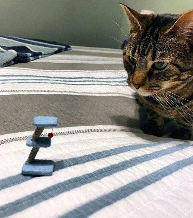 Когтеточка для кота-лилипута.