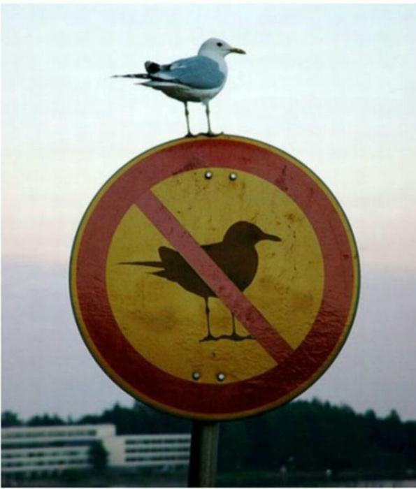 «Я - птица и плевать хотела на ваши запреты!»