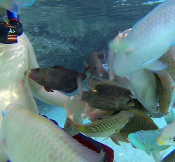 Кажется, рыбка задумала неладное... | Фото: chetkieprikol.mirtesen.ru.