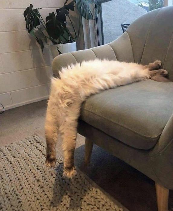 «Я слишком устал!» | Фото: Gramho.com.