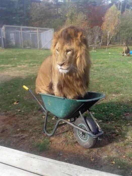 Царь в карете.