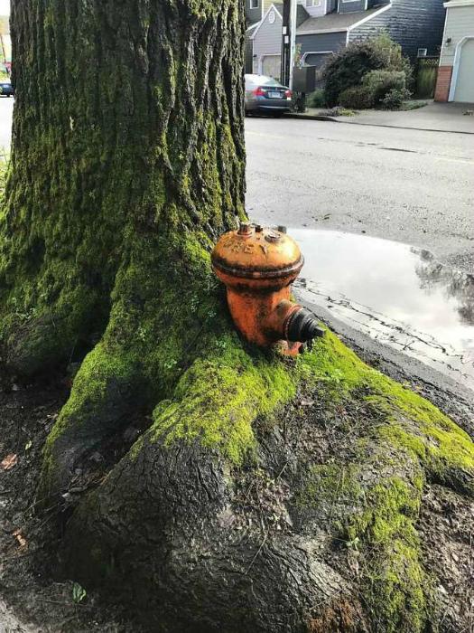 Пожарный гидрант в дереве.