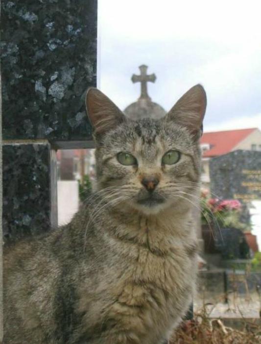 Еще один из лика святых. | Фото: Пикабу.
