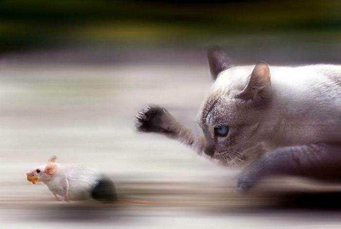 Кошка и мышка.