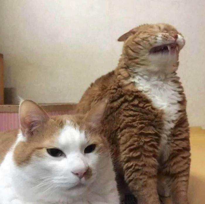 Кажется, котику нехорошо! | Фото: Reddit.