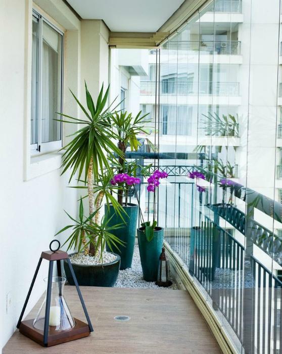 Растения на балконе. | Фото: Дизайн Эксперт.