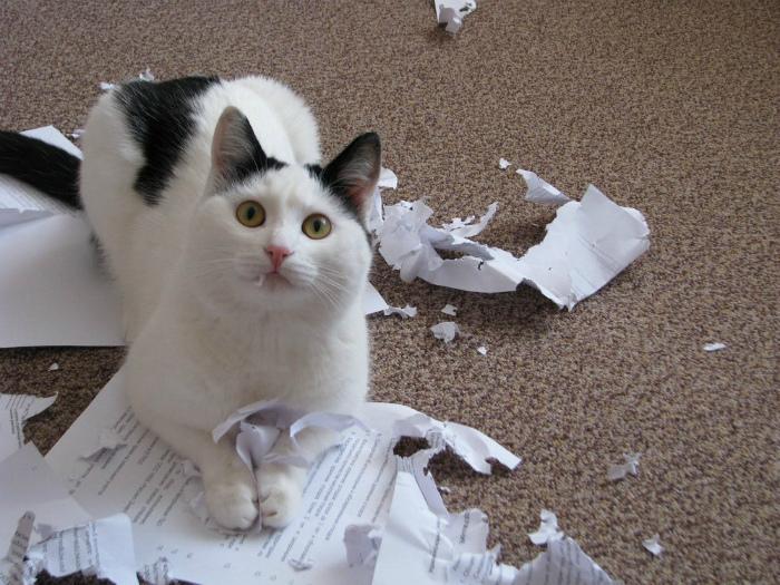 «Самое то для кошачьего лотка!» | Фото: Reddit.