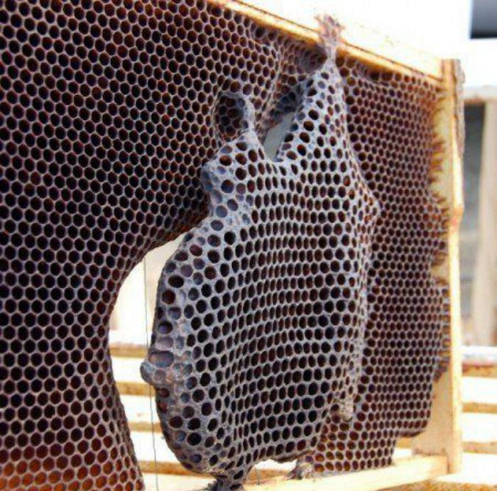 Пчелиные соты.