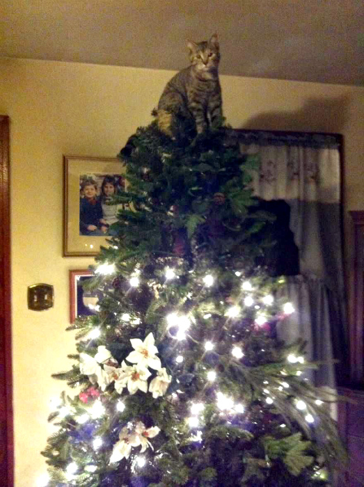 Кот на верхушке.