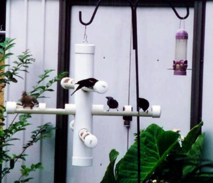 Кормушка для птиц. | Фото: TopBuzz.