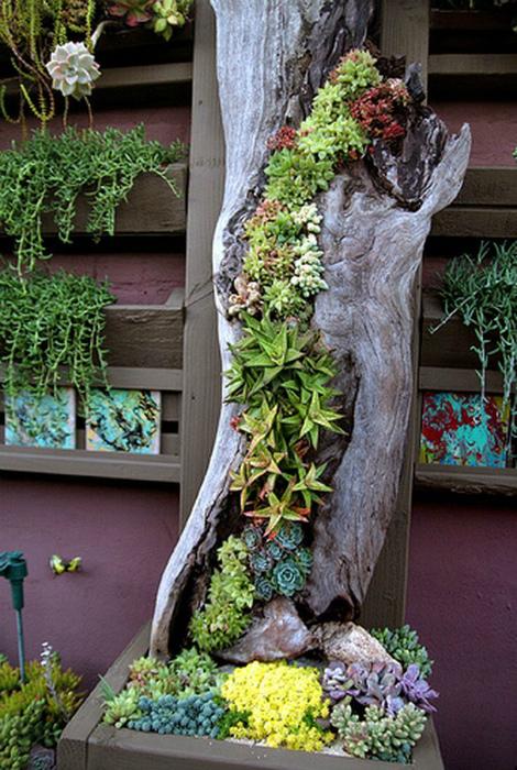 Вертикальный сад в сухом пне.
