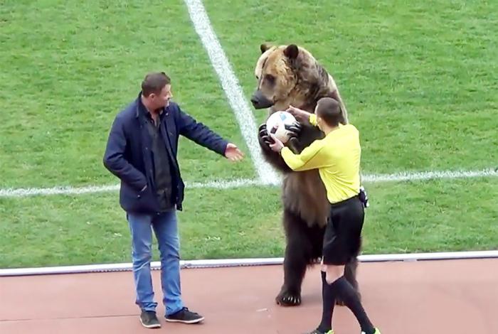 Не обошлось без медведя!