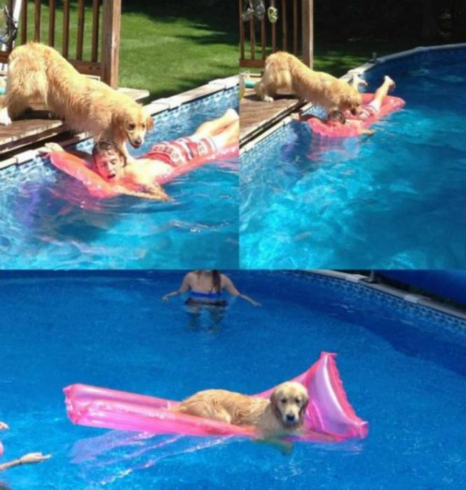 Случай в бассейне. | Фото: Peanut Chuck.