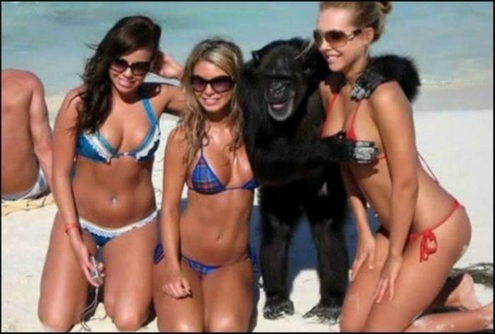 Похотливая обезьяна.