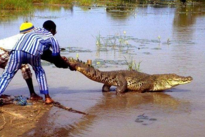У ребят есть все шансы «посчитать» зубы крокодила! | Фото: STENA.ee.