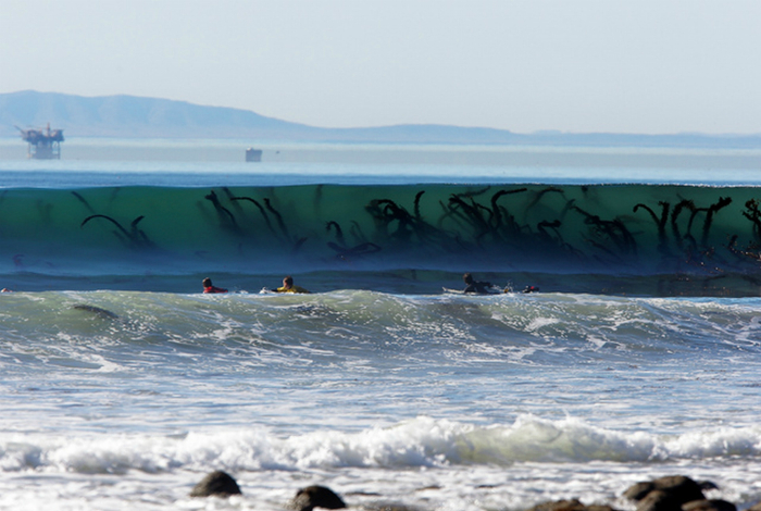 Огромные морские водоросли в волнах, которые выглядят пугающе.