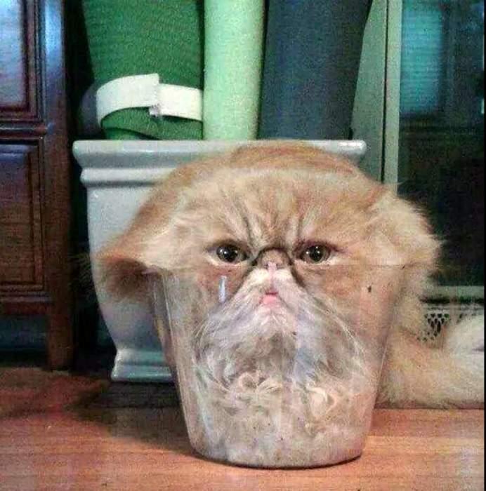 Вроде кот, но ведет себя, как кисель. | Фото: Новости N.