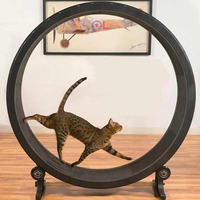 Беговой тренажер One Fast Cat.