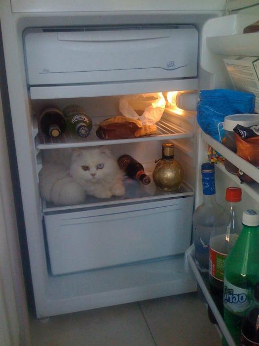 Положите кота в холодильник, чтоб не испортился! | Фото: Bored Panda.