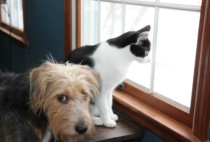 Испуганная собака и кот.