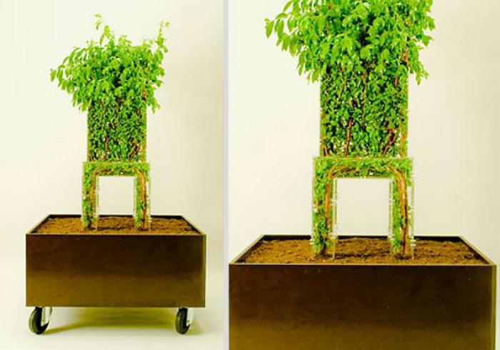 Стул, внутри которого растет настоящее дерево.