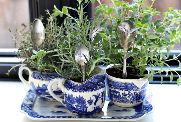 Растения в чашках.