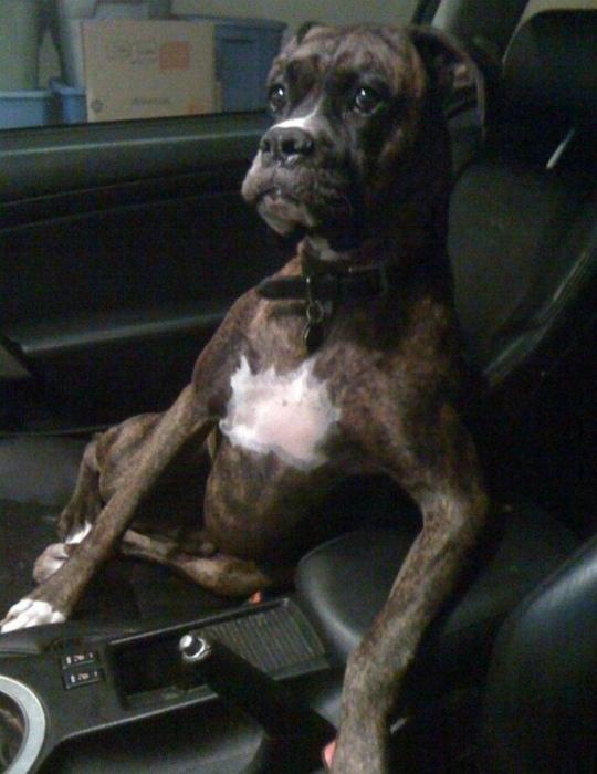 Важный пассажир.