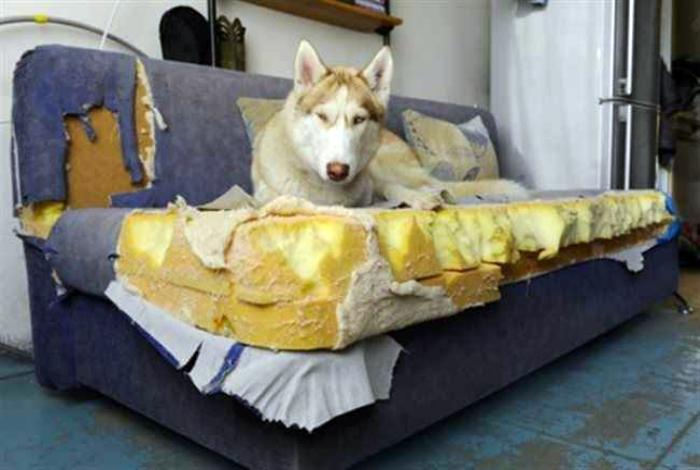 «Освежил» диван.