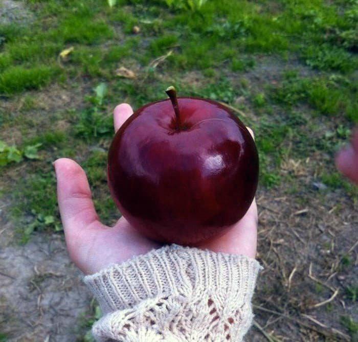 Идеальное яблоко. | Фото: Joe Monster.