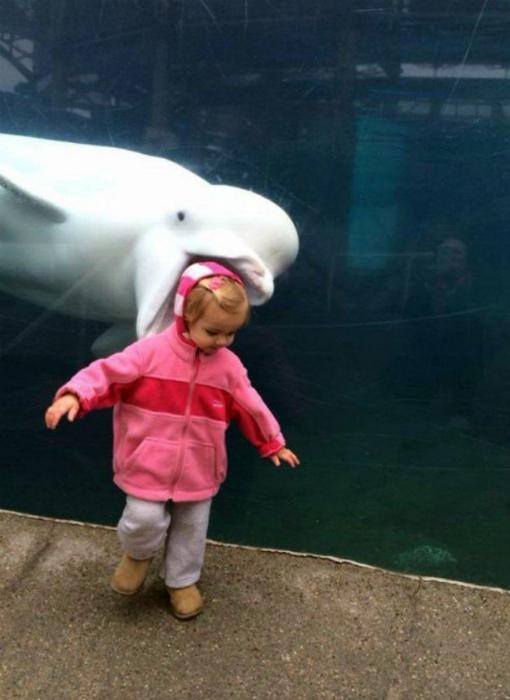 Голодный дельфин.