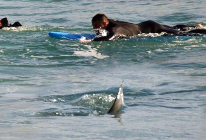 Этот плавник смутно напоминает плавник одной хищной рыбы... | Фото: hodor.lol.