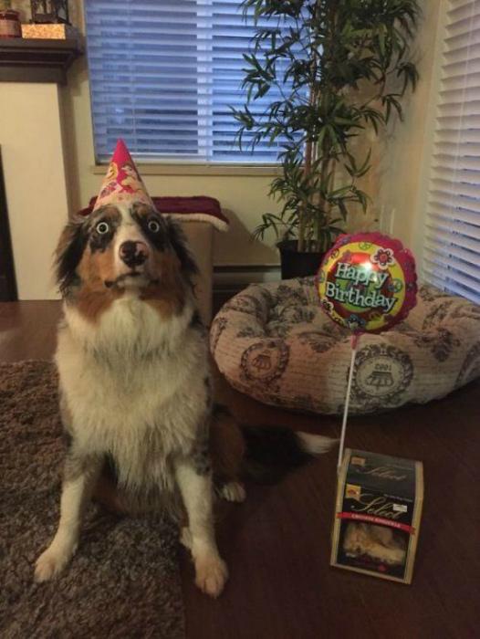 Собачий день рождения.