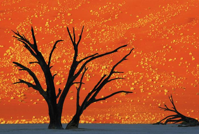 Окаменевшие пейзажи пустыни Намиб, напоминают картины известных сюрреалистов.