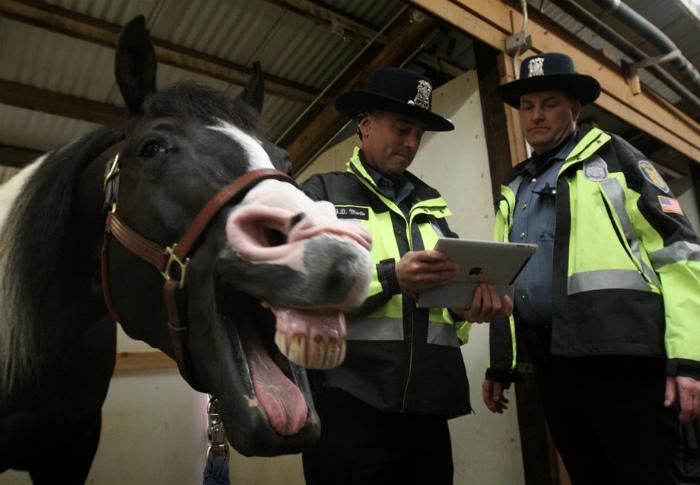 «Так и запишите: преступник улыбается и совершенно не раскаивается!» | Фото: Imglogy.com.