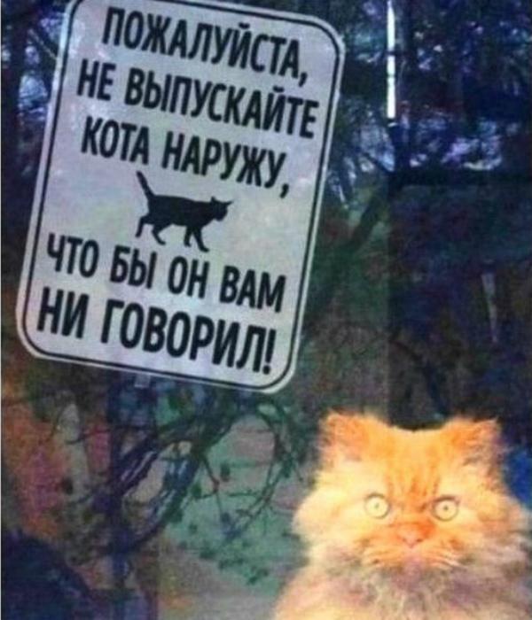 Очаровательный котейка.