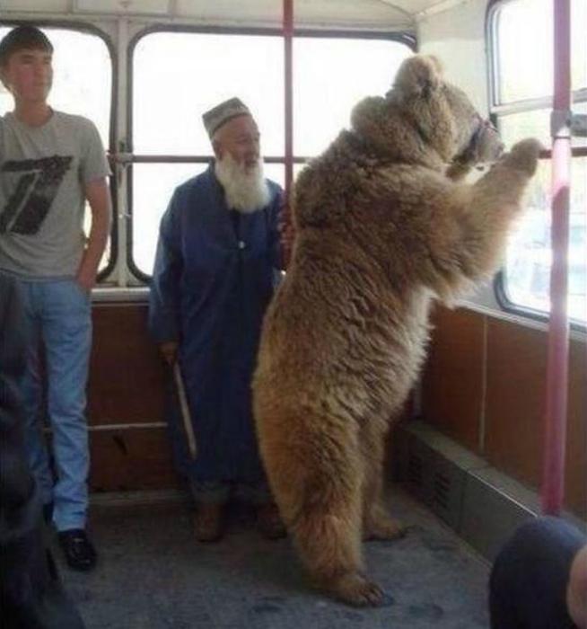 Пушистый пассажир.