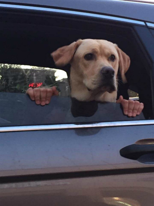 Собака с руками - обман зрения или еще один феномен наших дней? | Фото: Clipmass.com.