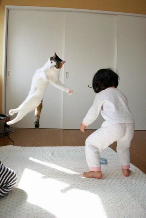 Кошка полетела.