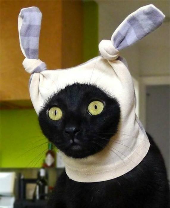 Кроличья шапка.