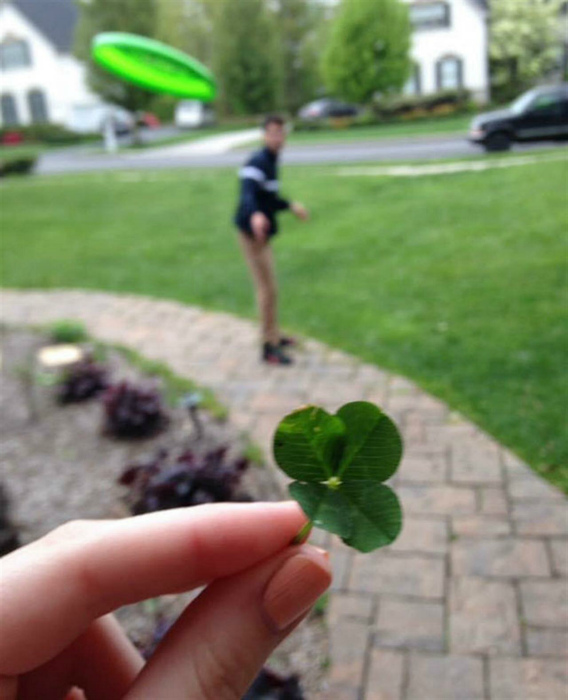 Клевер - символ удачи. | Фото: Фишки.нет.