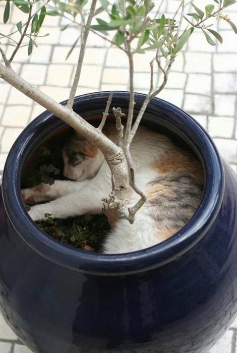Задремал в тени дерева. | Фото: Reveddit.
