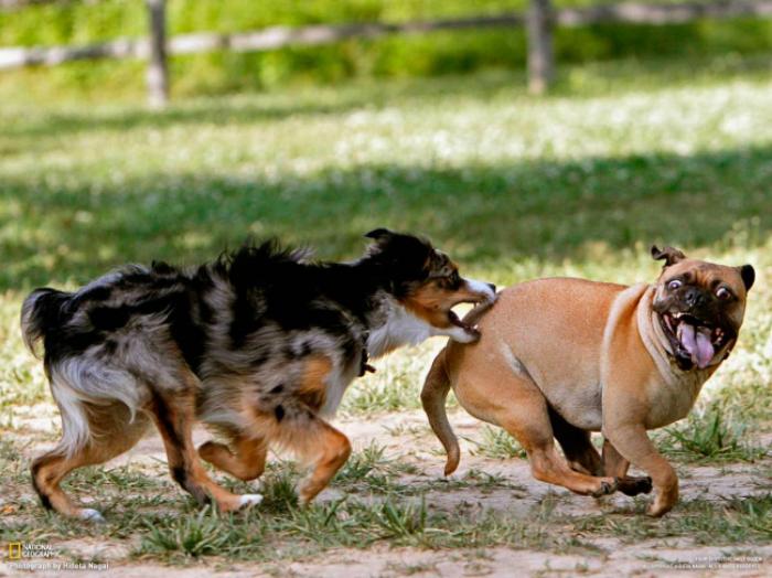 Собачьи игрища.