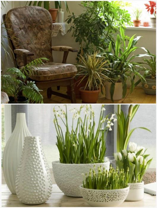 Растения в интерьере.
