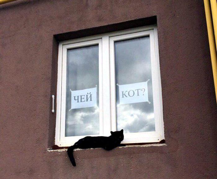 Заберите уже, наконец, своего кота. | Фото: Здесь только хорошие новости!