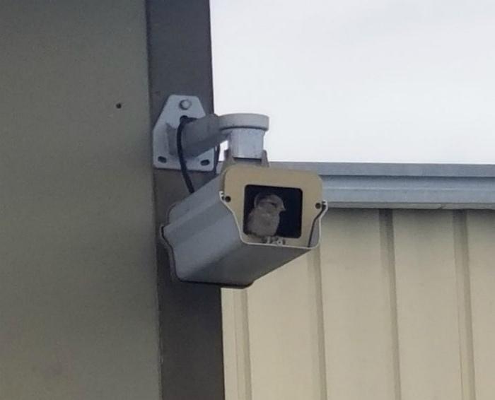 Эко-система видеонаблюдения. | Фото: AdMe.