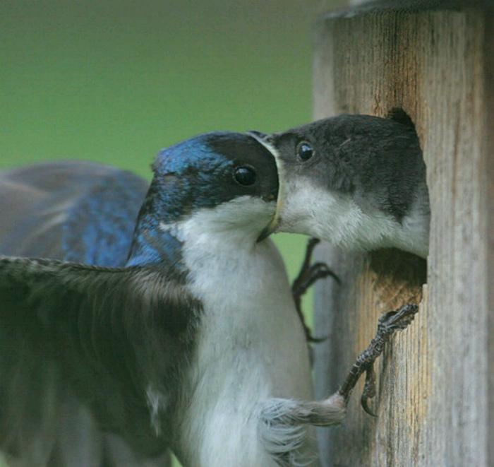 Думаете, целуются? Да нет, она просто забирает еду! | Фото: Objektiv Media.