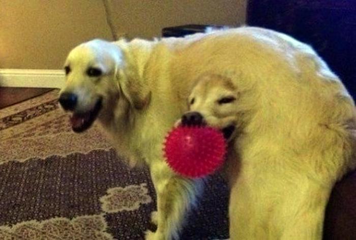 Кажется, один из псов застрял в текстурах. | Фото: Тутка.