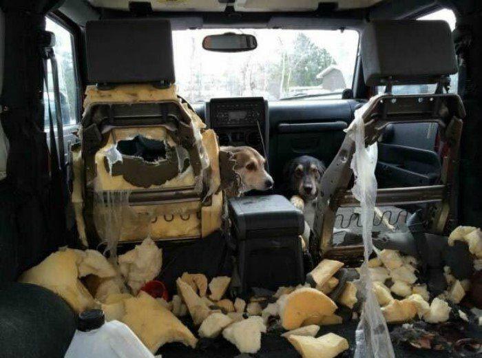 Сразу видно, что собачкам было грустно! | Фото: Mixnews.