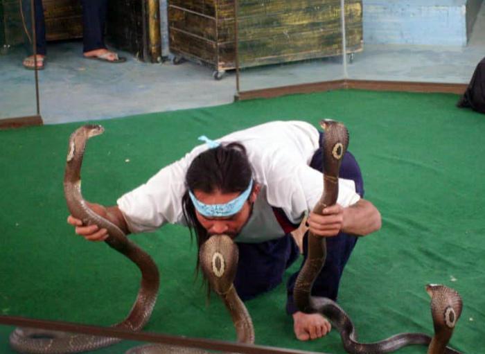 Любитель змей.   Фото: Twitter.